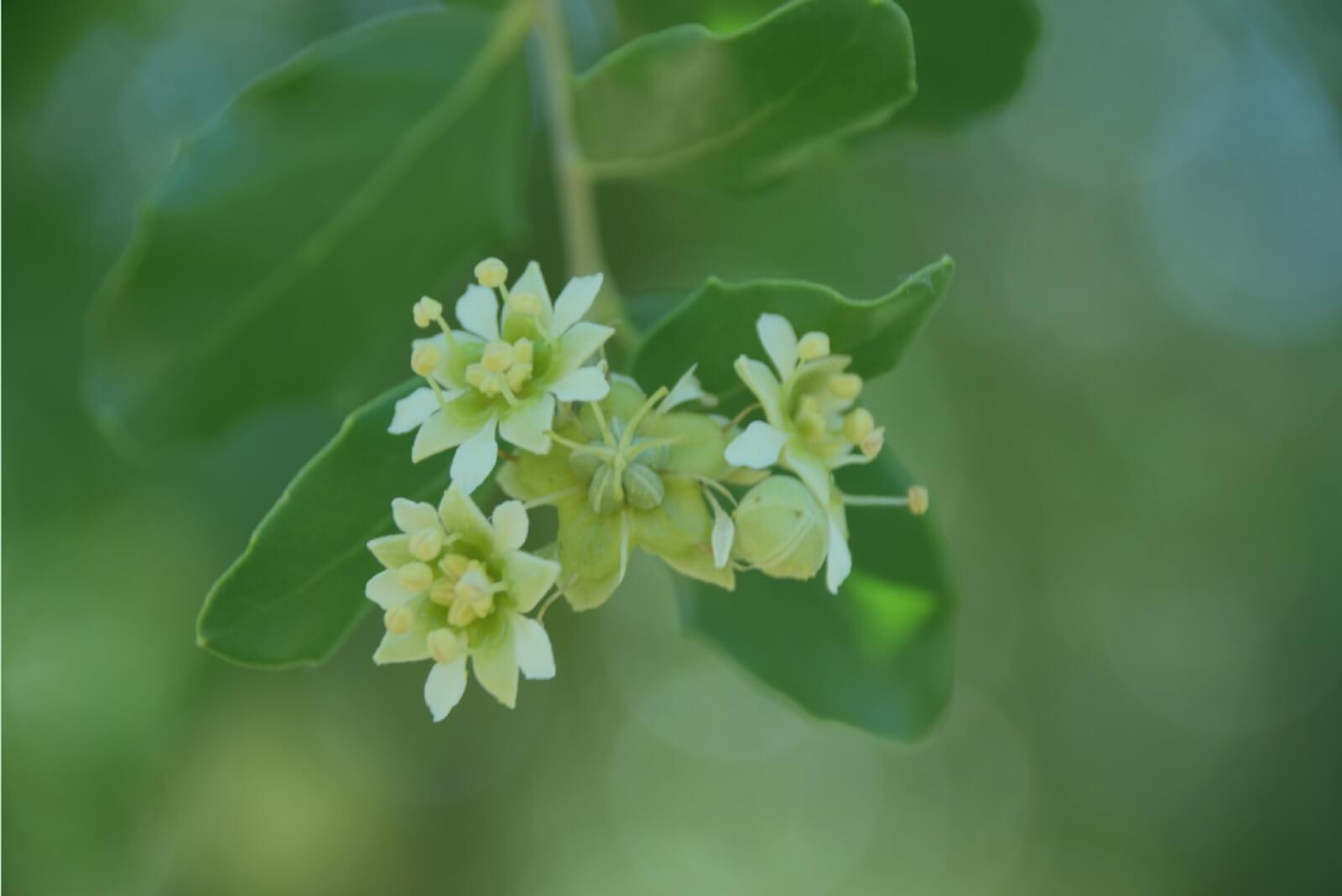 pw-chile-botanics-01